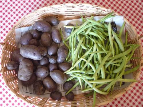 jardin, jura, viry,fleurs, haricots, CHOU, COURGETTE, POMME DE TERRE,