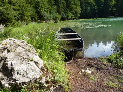 lac Genin, balade, nénuphar, nature, été,
