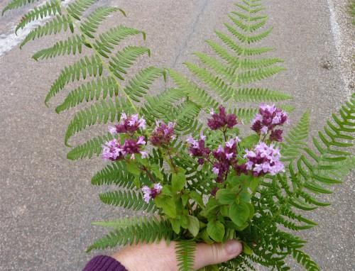 colchique, fleurs, viry,jura cretdulon,cardere,