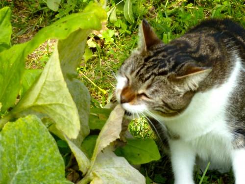 jardin, viry, jura, salade, courgettes,pluie,été