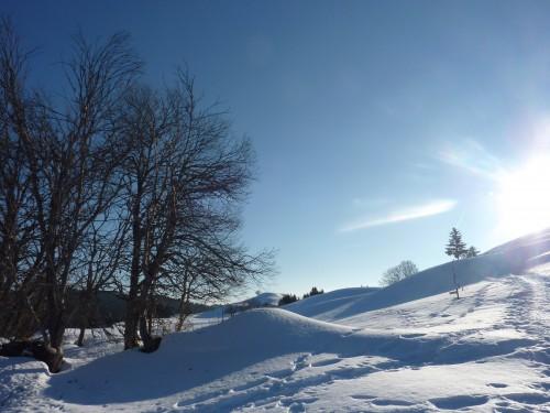 La Pesse,Jura,raquettes,neige,hiver,chiens de traineau,gîte,refuge,crêt de Chalam,
