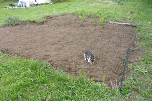 Viry,Jura,jardin,plantation,recycl'aire,