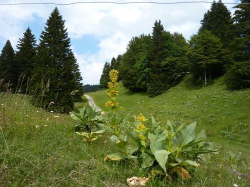 Viry, La Pesse, Haut-Jura, campagne, caredda,
