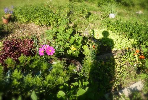 jardin, plantes, fleurs, destresse, viry,Jura,jardinage