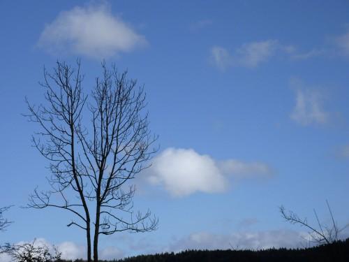 Viry,hiver,ciel,nuage,poésie,frêne,Jura,,nature,arbre